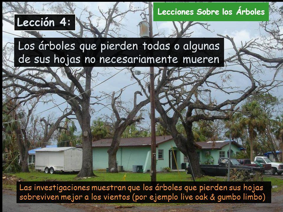 Los árboles que pierden todas o algunas de sus hojas no necesariamente mueren Las investigaciones muestran que los árboles que pierden sus hojas sobre