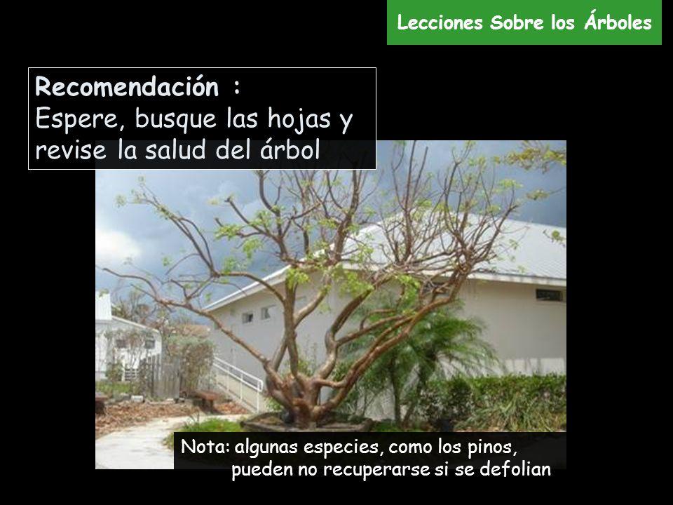 Nota: algunas especies, como los pinos, pueden no recuperarse si se defolian Recomendación : Espere, busque las hojas y revise la salud del árbol Lecc