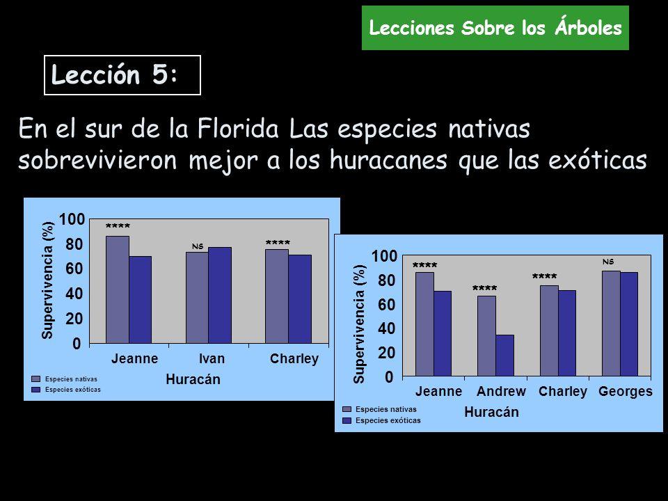 En el sur de la Florida Las especies nativas sobrevivieron mejor a los huracanes que las exóticas 0 20 40 60 80 100 JeanneIvanCharley Supervivencia (%