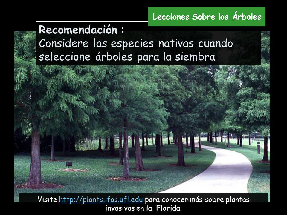Recomendación : Considere las especies nativas cuando seleccione árboles para la siembra Visite http://plants.ifas.ufl.edu para conocer más sobre plan