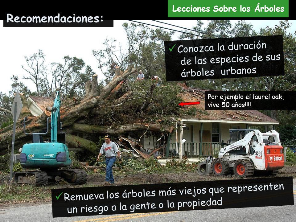 Remueva los árboles más viejos que representen un riesgo a la gente o la propiedad Recomendaciones: Conozca la duración de las especies de sus árboles