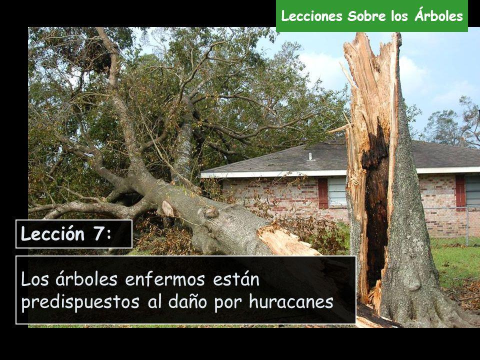 Los árboles enfermos están predispuestos al daño por huracanes Lección 7: Lecciones Sobre los Árboles