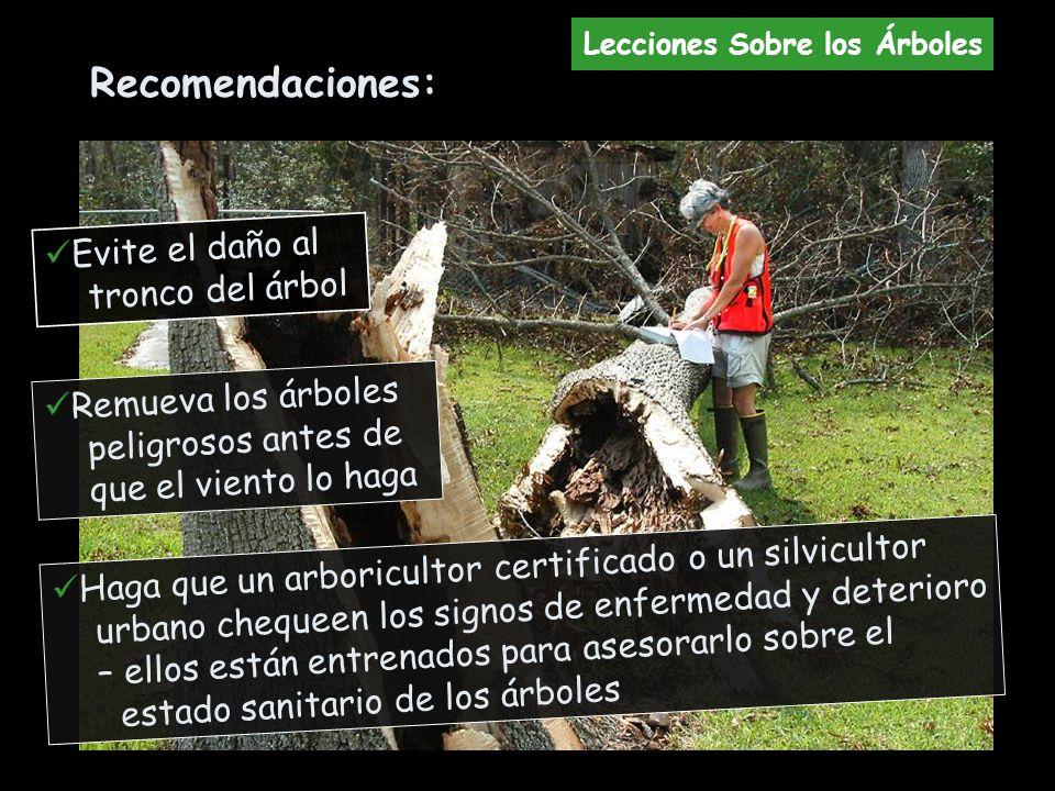 Remueva los árboles peligrosos antes de que el viento lo haga Haga que un arboricultor certificado o un silvicultor urbano chequeen los signos de enfe