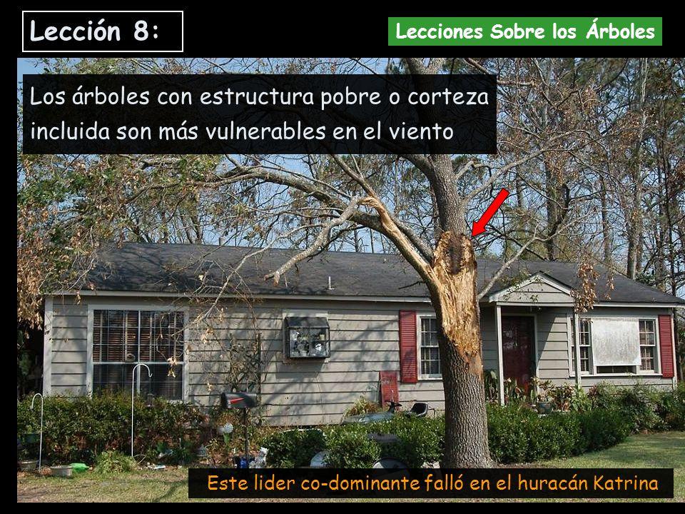 Los árboles con estructura pobre o corteza incluida son más vulnerables en el viento Este lider co-dominante falló en el huracán Katrina Lección 8: Le