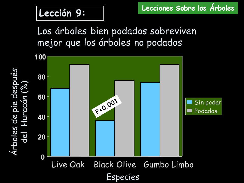 Árboles de pie después del Huracán (%) Especies Lección 9: Los árboles bien podados sobreviven mejor que los árboles no podados Lecciones Sobre los Ár