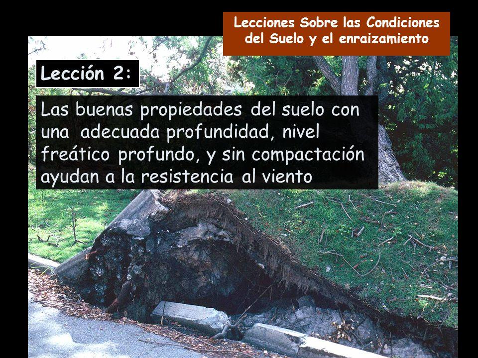 Las buenas propiedades del suelo con una adecuada profundidad, nivel freático profundo, y sin compactación ayudan a la resistencia al viento Lección 2