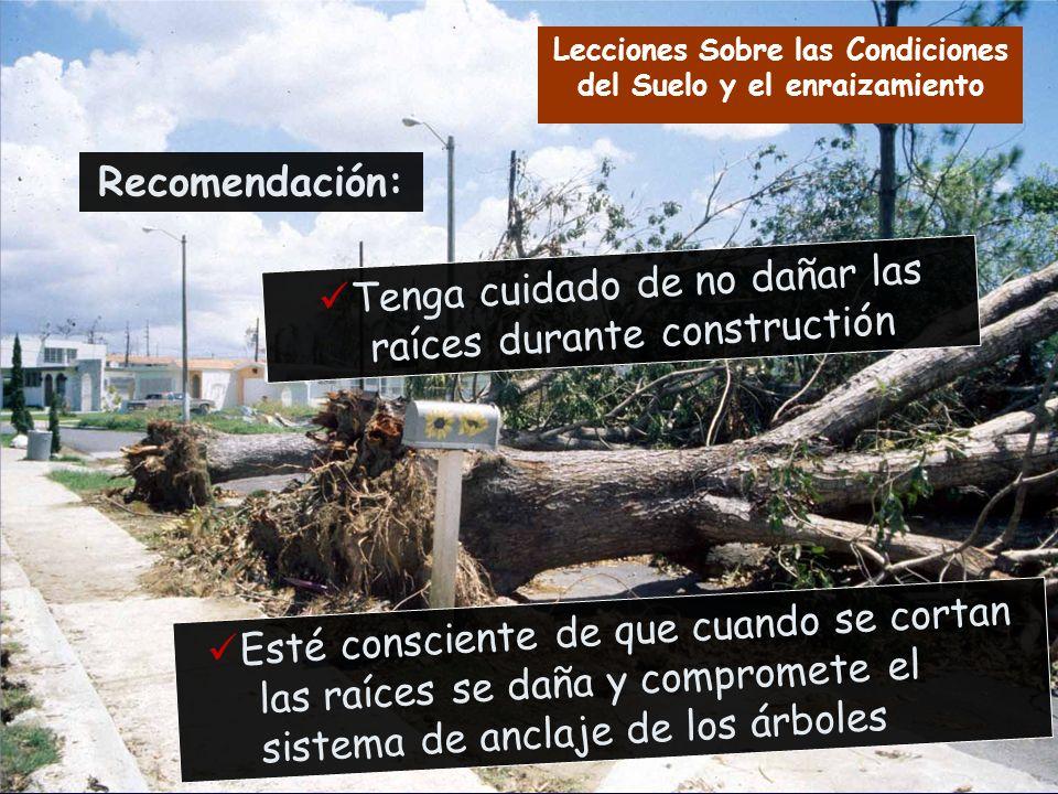 Tenga cuidado de no dañar las raíces durante constructión Esté consciente de que cuando se cortan las raíces se daña y compromete el sistema de anclaj