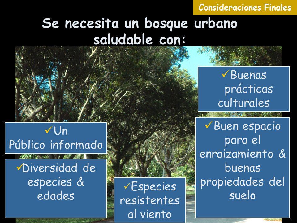 Se necesita un bosque urbano saludable con: Especies resistentes al viento Diversidad de especies & edades Buen espacio para el enraizamiento & buenas