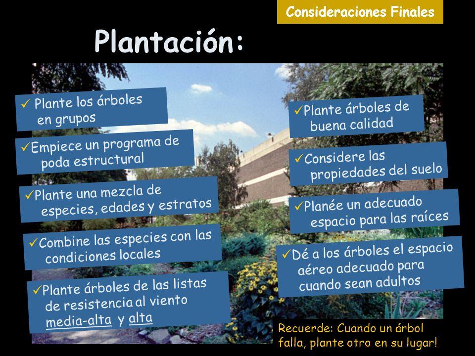 Plantación: Recuerde: Cuando un árbol falla, plante otro en su lugar! Dé a los árboles el espacio aéreo adecuado para cuando sean adultos Considere la