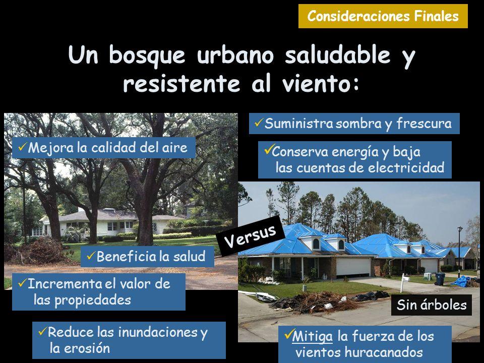 Un bosque urbano saludable y resistente al viento: Versus Suministra sombra y frescura Sin árboles Reduce las inundaciones y la erosión Incrementa el