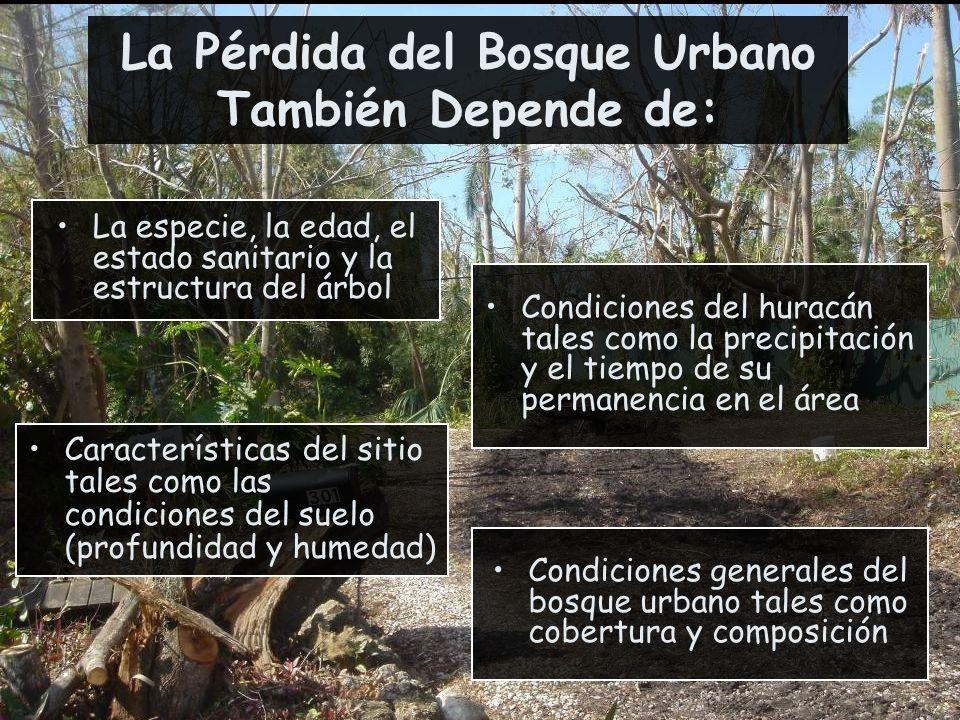 Condiciones generales del bosque urbano tales como cobertura y composición La Pérdida del Bosque Urbano También Depende de: La especie, la edad, el es