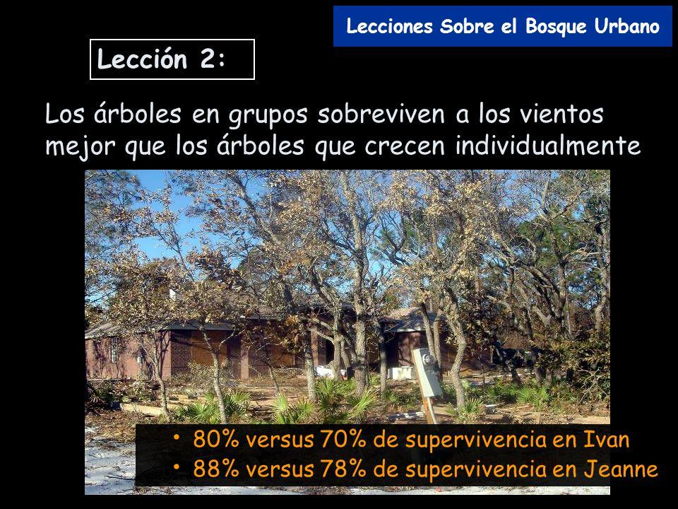 Los árboles en grupos sobreviven a los vientos mejor que los árboles que crecen individualmente 80% versus 70% de supervivencia en Ivan 88% versus 78%