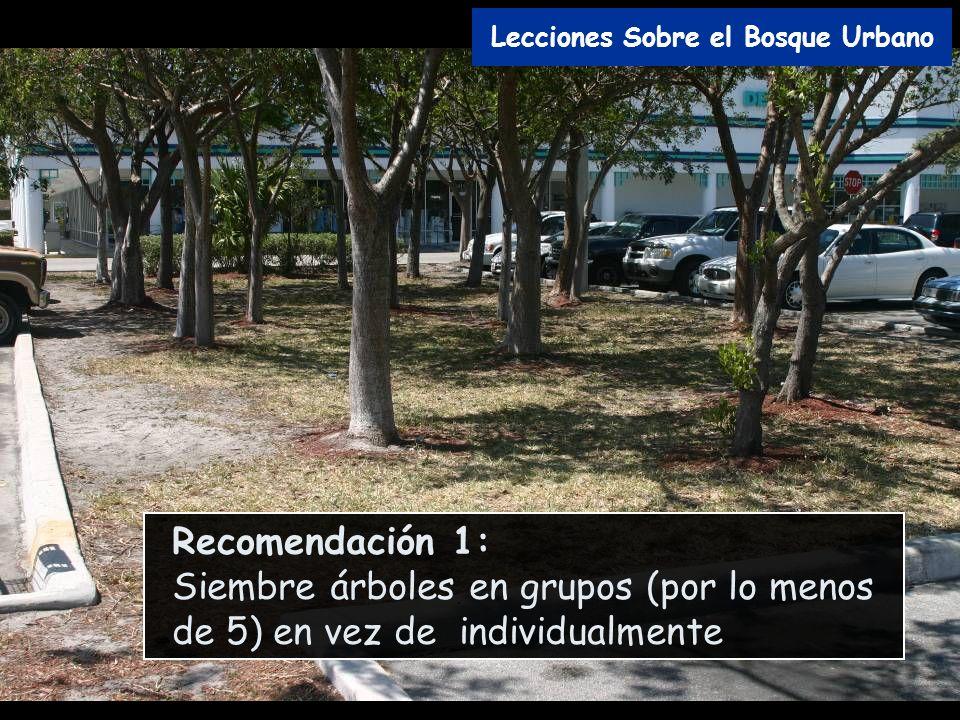Recomendación 1: Siembre árboles en grupos (por lo menos de 5) en vez de individualmente Lecciones Sobre el Bosque Urbano