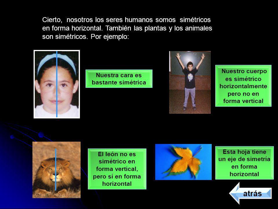 Cierto, nosotros los seres humanos somos simétricos en forma horizontal. También las plantas y los animales son simétricos. Por ejemplo: Nuestra cara