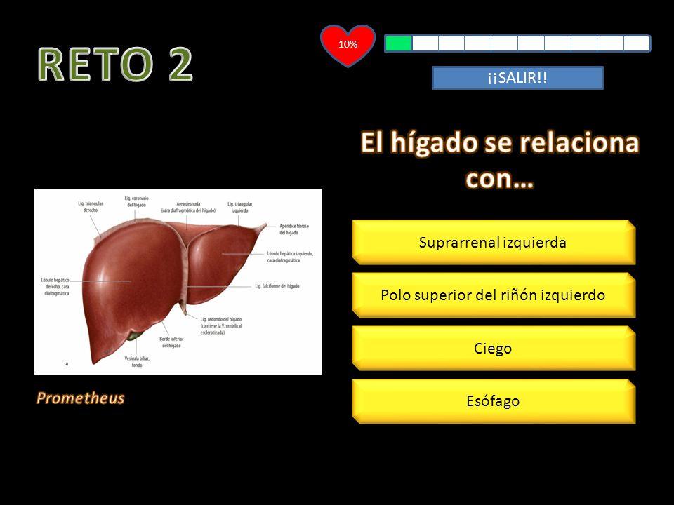 60% La arteria hepática común es rama del tronco celíaco La mayor parte del aporte sanguíneo al hígado es a través de la arteria hepática La arteria hepática izquierda es constante La vena porta aporta el 25% de sangre al hígado ¡¡SALIR!!
