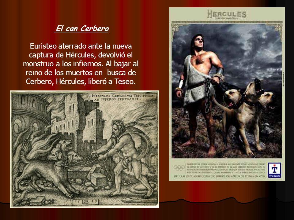 El can Cerbero Euristeo aterrado ante la nueva captura de Hércules, devolvió el monstruo a los infiernos. Al bajar al reino de los muertos en busca de