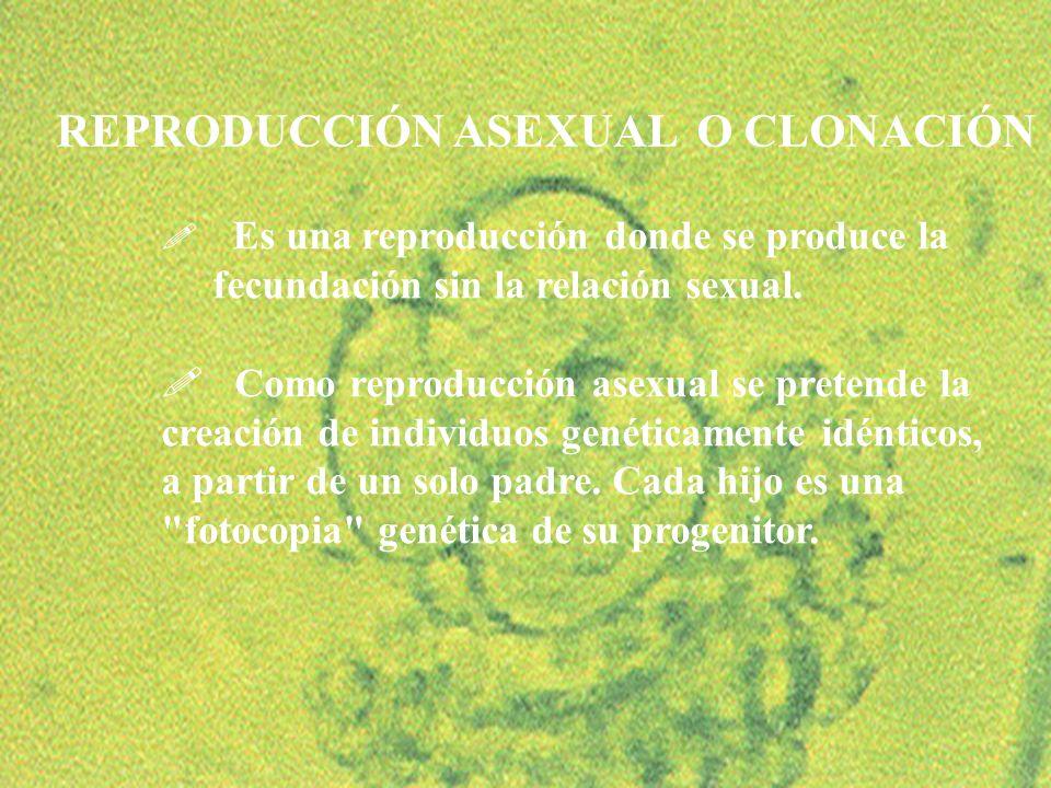 25 ! Es una reproducción donde se produce la fecundación sin la relación sexual. ! Como reproducción asexual se pretende la creación de individuos gen