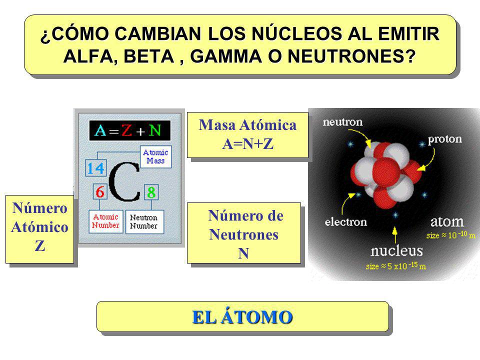 ¿CÓMO CAMBIAN LOS NÚCLEOS AL EMITIR ALFA, BETA, GAMMA O NEUTRONES? Masa Atómica A=N+Z Número Atómico Z Número de Neutrones N EL ÁTOMO