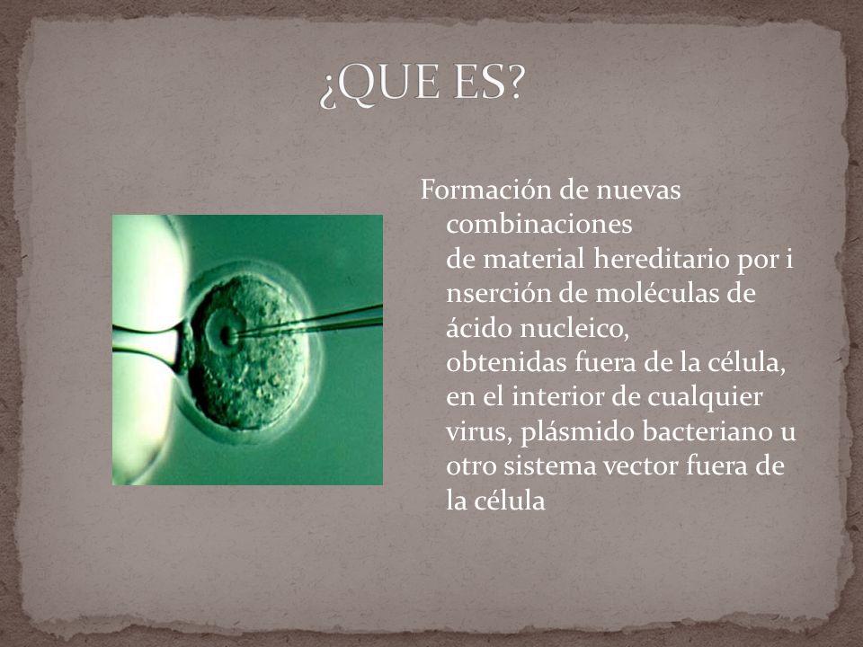 Formación de nuevas combinaciones de material hereditario por i nserción de moléculas de ácido nucleico, obtenidas fuera de la célula, en el interior de cualquier virus, plásmido bacteriano u otro sistema vector fuera de la célula