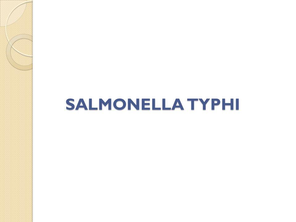 SALMONELLA TYPHI