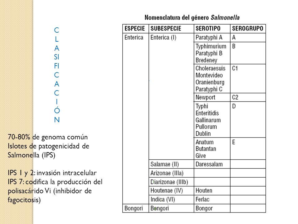 C L A SI FI C A C I Ó N 70-80% de genoma común Islotes de patogenicidad de Salmonella (IPS) IPS 1 y 2: invasión intracelular IPS 7: codifica la producción del polisacárido Vi (inhibidor de fagocitosis)