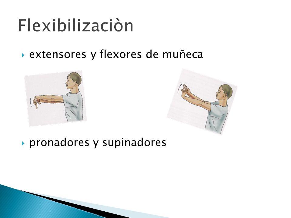 extensores y flexores de muñeca pronadores y supinadores
