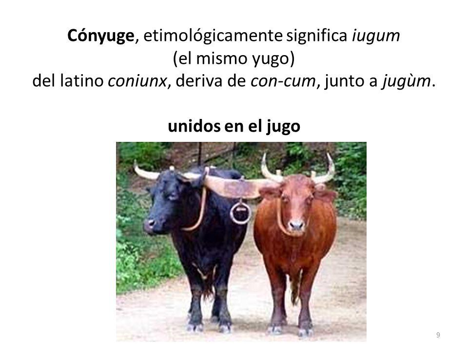 Cónyuge, etimológicamente significa iugum (el mismo yugo) del latino coniunx, deriva de con-cum, junto a jugùm. unidos en el jugo 9