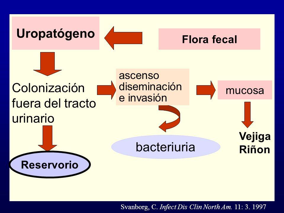 mucosa bacteriuria Uropatógeno Vejiga Riñon Flora fecal Reservorio Colonización fuera del tracto urinario ascenso diseminación e invasión Reservorio S