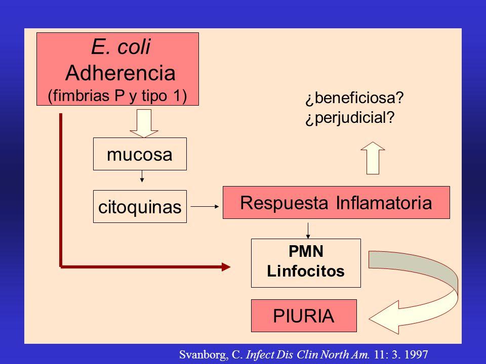 mucosa Respuesta Inflamatoria PMN Linfocitos citoquinas PIURIA ¿beneficiosa? ¿perjudicial? E. coli Adherencia (fimbrias P y tipo 1) Svanborg, C. Infec