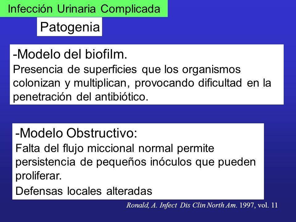Infección Urinaria Complicada Patogenia -Modelo del biofilm. Presencia de superficies que los organismos colonizan y multiplican, provocando dificulta