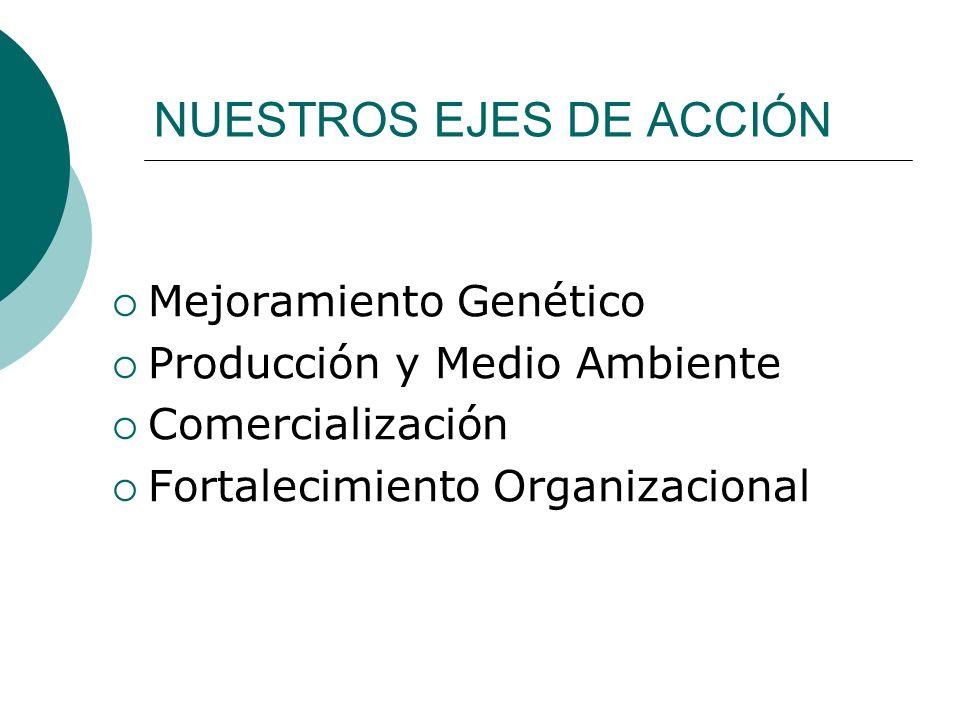 NUESTROS EJES DE ACCIÓN Mejoramiento Genético Producción y Medio Ambiente Comercialización Fortalecimiento Organizacional