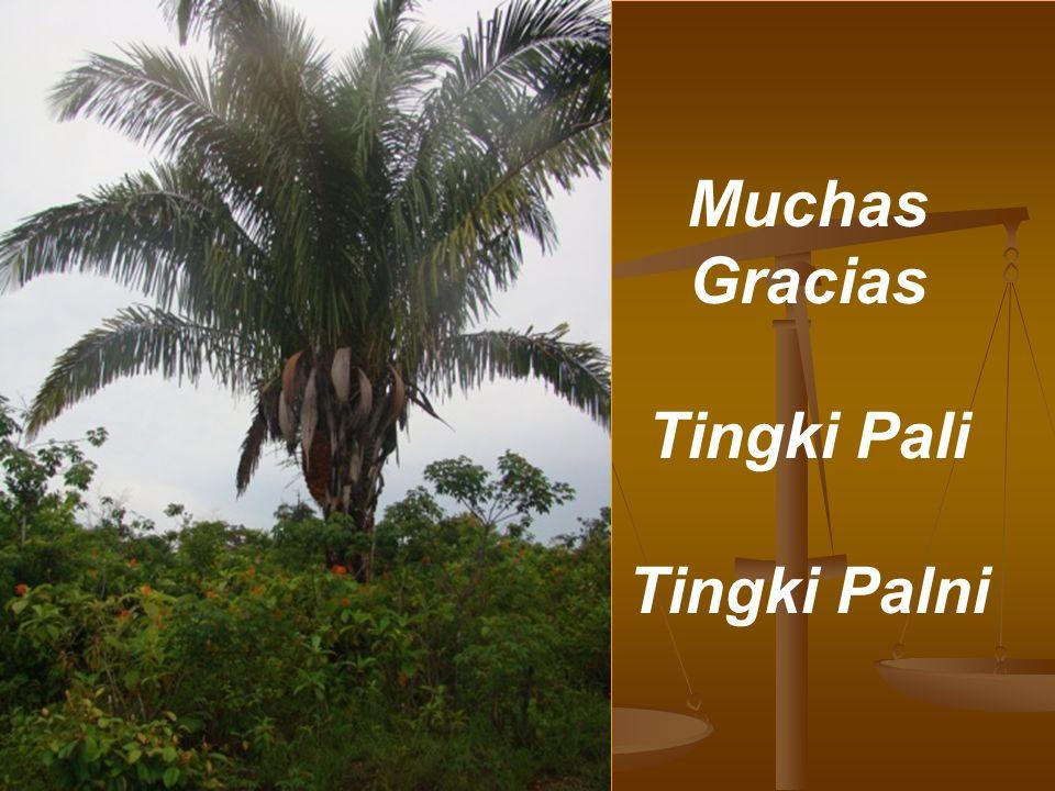 Muchas Gracias Tingki Pali Tingki Palni
