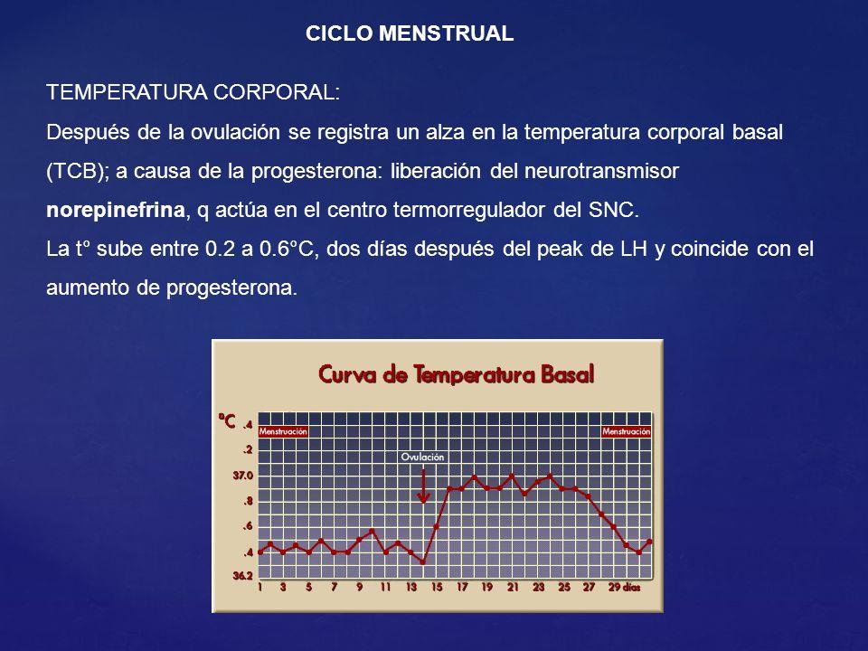 CICLO MENSTRUAL TEMPERATURA CORPORAL: Después de la ovulación se registra un alza en la temperatura corporal basal (TCB); a causa de la progesterona: liberación del neurotransmisor norepinefrina, q actúa en el centro termorregulador del SNC.