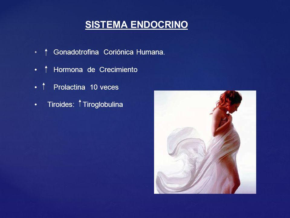 SISTEMA ENDOCRINO Gonadotrofina Coriónica Humana.