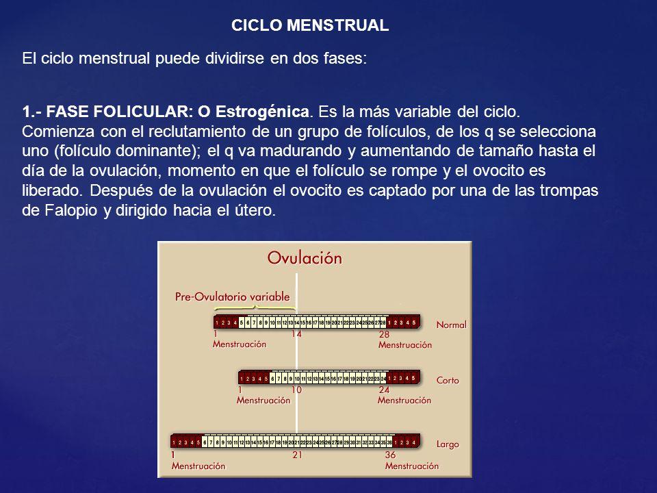 CICLO MENSTRUAL El ciclo menstrual puede dividirse en dos fases: 1.- FASE FOLICULAR: O Estrogénica.