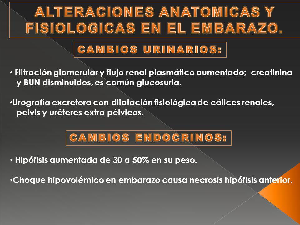 Filtración glomerular y flujo renal plasmático aumentado; creatinina y BUN disminuidos, es común glucosuria. Urografía excretora con dilatación fisiol