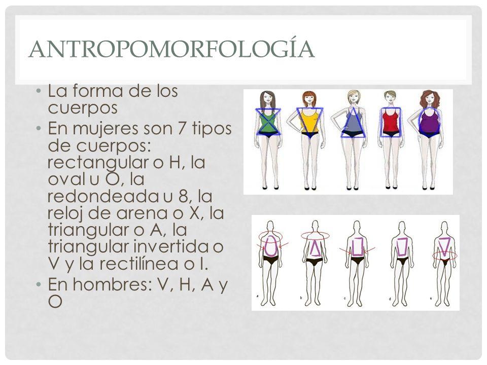 ANTROPOMORFOLOGÍA La forma de los cuerpos En mujeres son 7 tipos de cuerpos: rectangular o H, la oval u O, la redondeada u 8, la reloj de arena o X, l