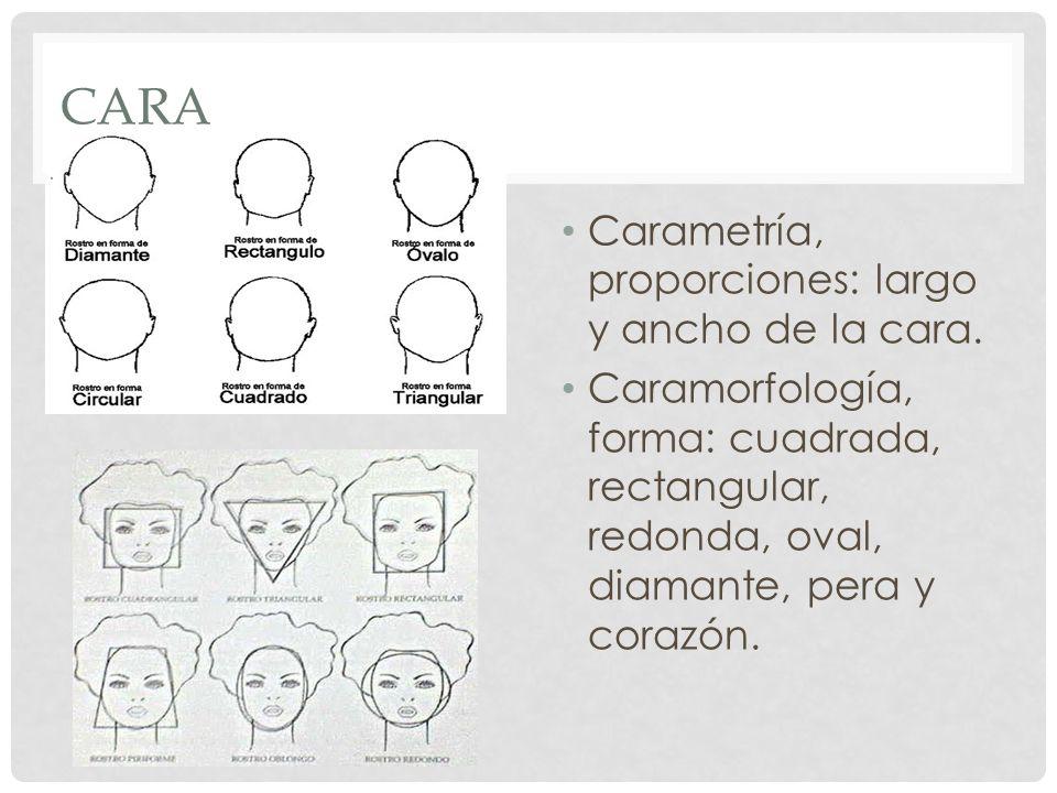 CARA Carametría, proporciones: largo y ancho de la cara. Caramorfología, forma: cuadrada, rectangular, redonda, oval, diamante, pera y corazón.