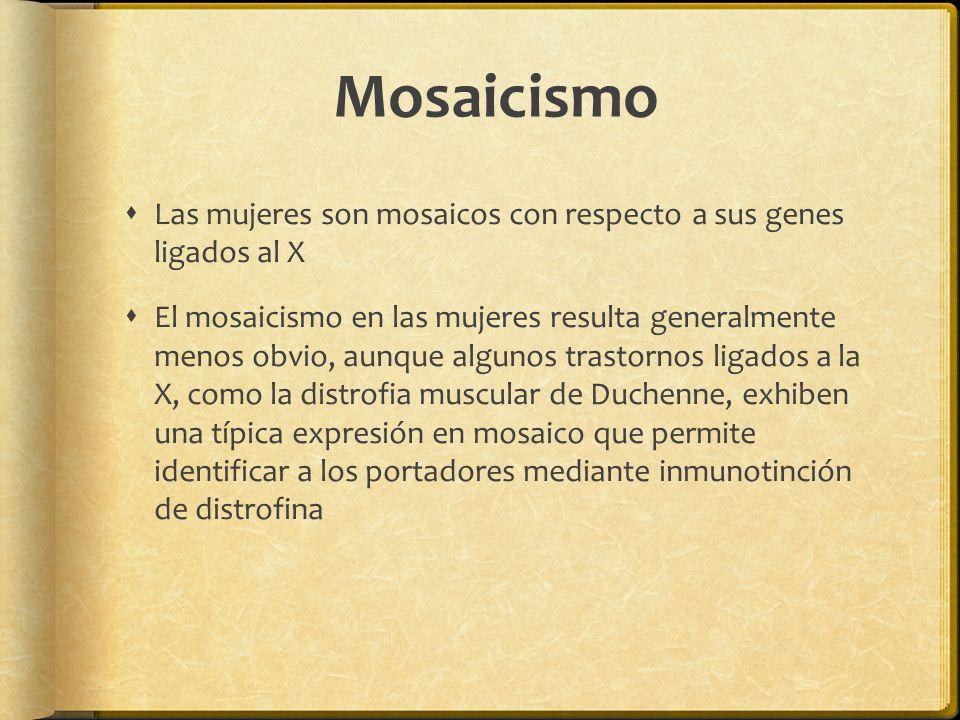 Mosaicismo Las mujeres son mosaicos con respecto a sus genes ligados al X El mosaicismo en las mujeres resulta generalmente menos obvio, aunque algunos trastornos ligados a la X, como la distrofia muscular de Duchenne, exhiben una típica expresión en mosaico que permite identificar a los portadores mediante inmunotinción de distrofina