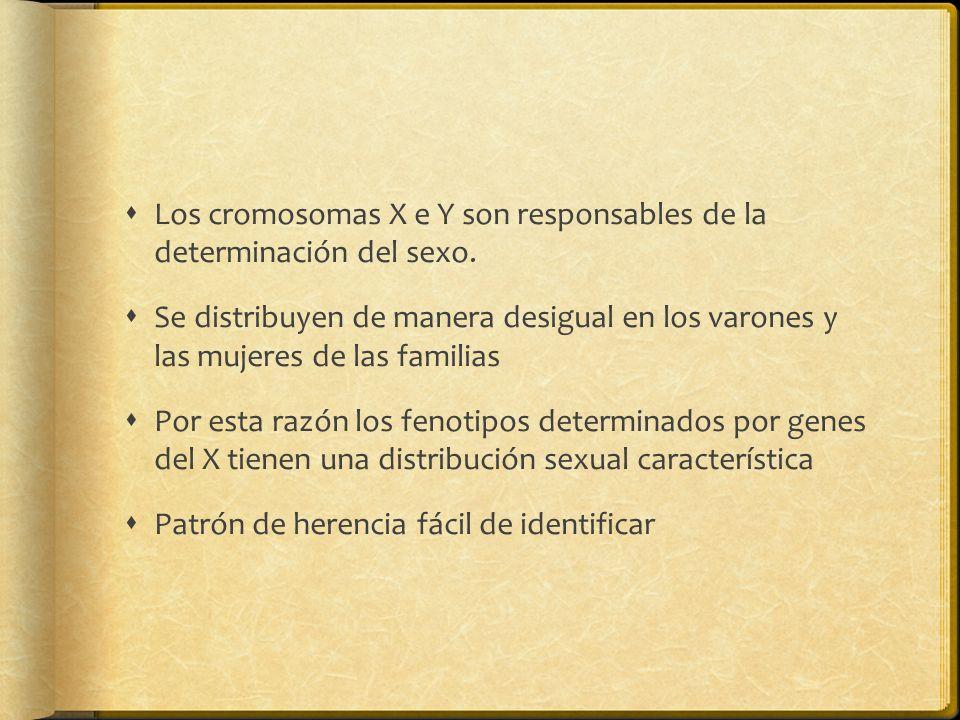 Los cromosomas X e Y son responsables de la determinación del sexo.