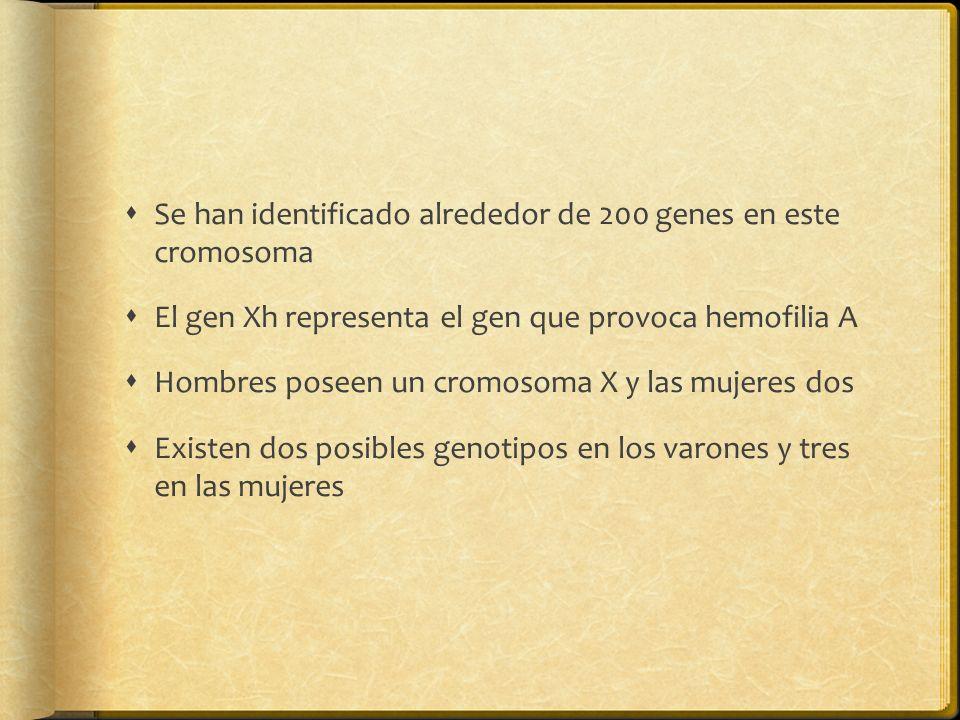 Se han identificado alrededor de 200 genes en este cromosoma El gen Xh representa el gen que provoca hemofilia A Hombres poseen un cromosoma X y las mujeres dos Existen dos posibles genotipos en los varones y tres en las mujeres