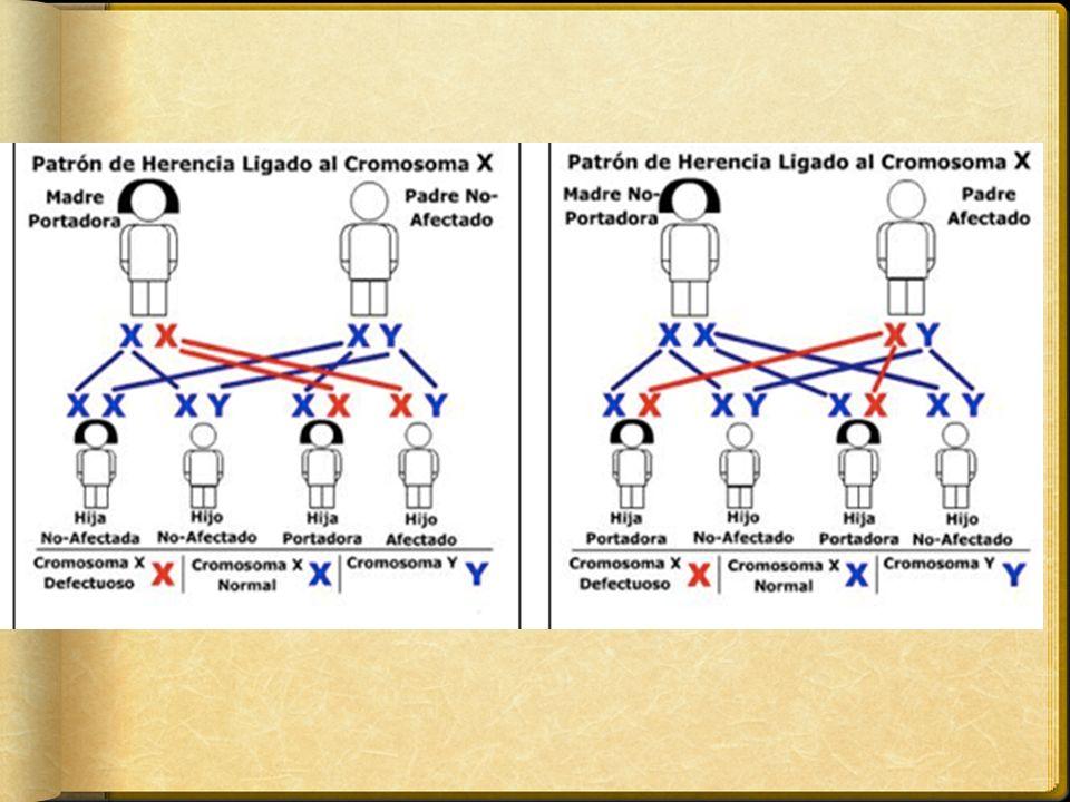 Esto ocurre porque en una mujer heterocigota para un trastorno dominante o recesivo, el alelo mutante constituye el único alelo funcional en alrededor de la mitad de sus células somáticas En el hombre el alelo hereditario se expresa inevitablemente ya sea su expresión en heterocigoto dominante o recesiva