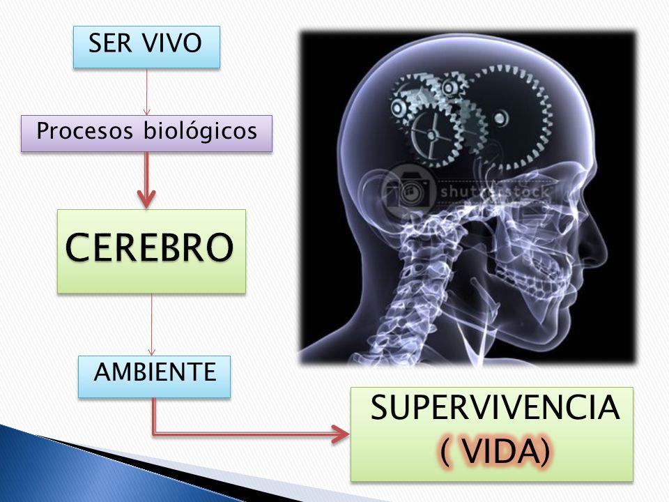 Procesos biológicos SER VIVO AMBIENTE