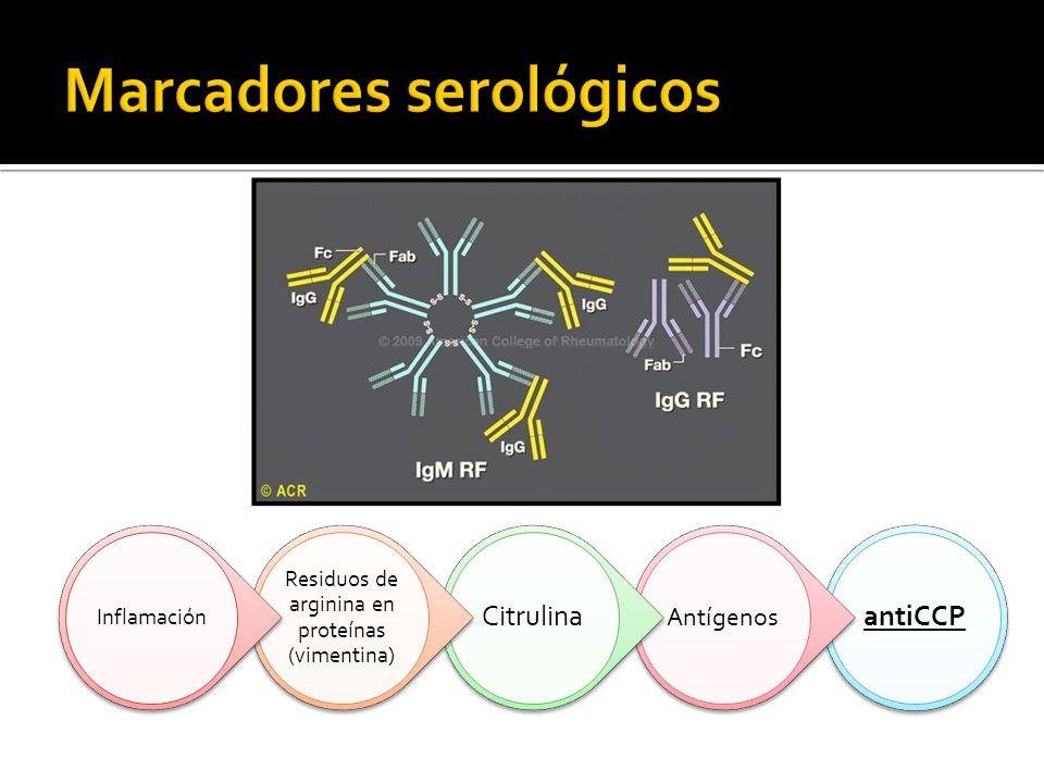antiCCP Antígenos Citrulina Residuos de arginina en proteínas (vimentina) Inflamación