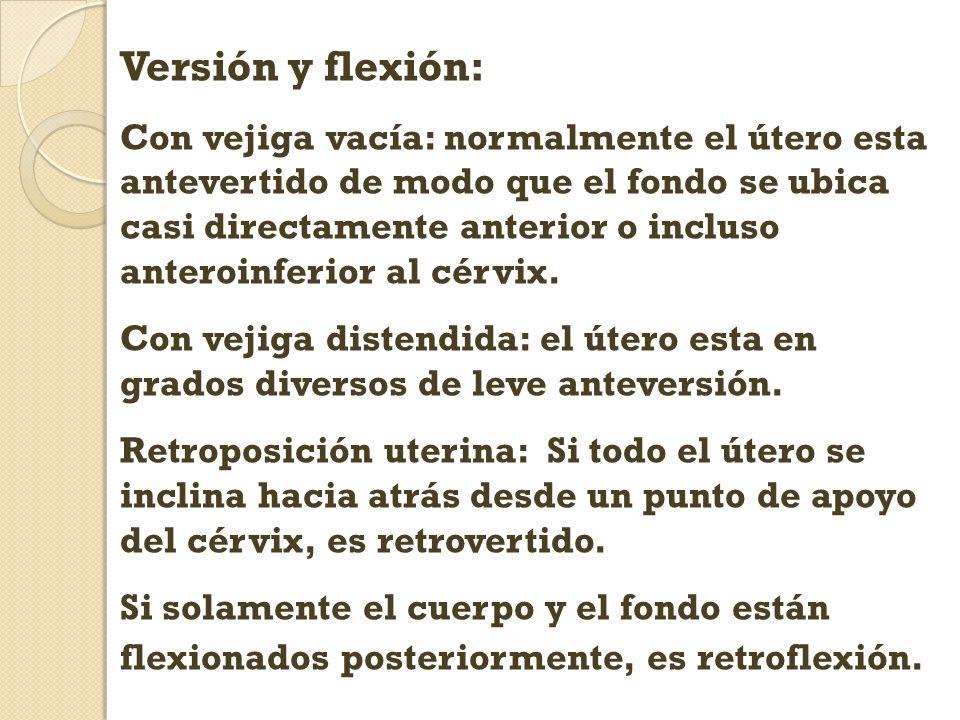 Versión y flexión: Con vejiga vacía: normalmente el útero esta antevertido de modo que el fondo se ubica casi directamente anterior o incluso anteroin