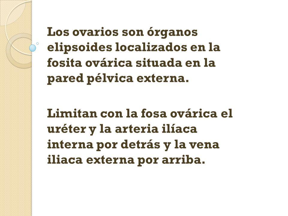Los ovarios son órganos elipsoides localizados en la fosita ovárica situada en la pared pélvica externa. Limitan con la fosa ovárica el uréter y la ar