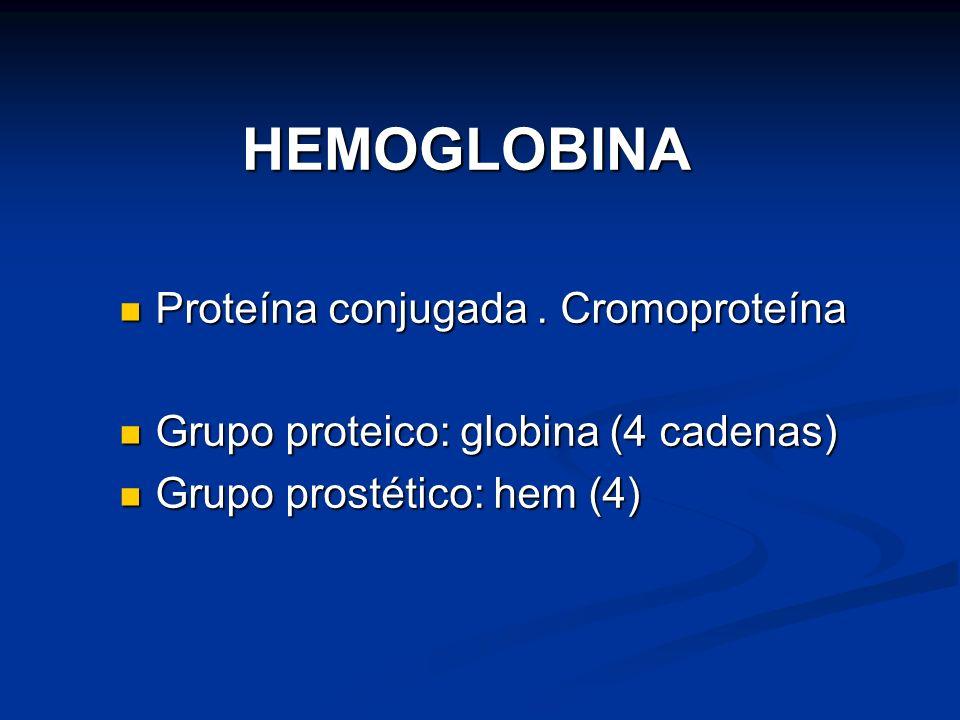 HEMOGLOBINA Proteína conjugada. Cromoproteína Proteína conjugada. Cromoproteína Grupo proteico: globina (4 cadenas) Grupo proteico: globina (4 cadenas