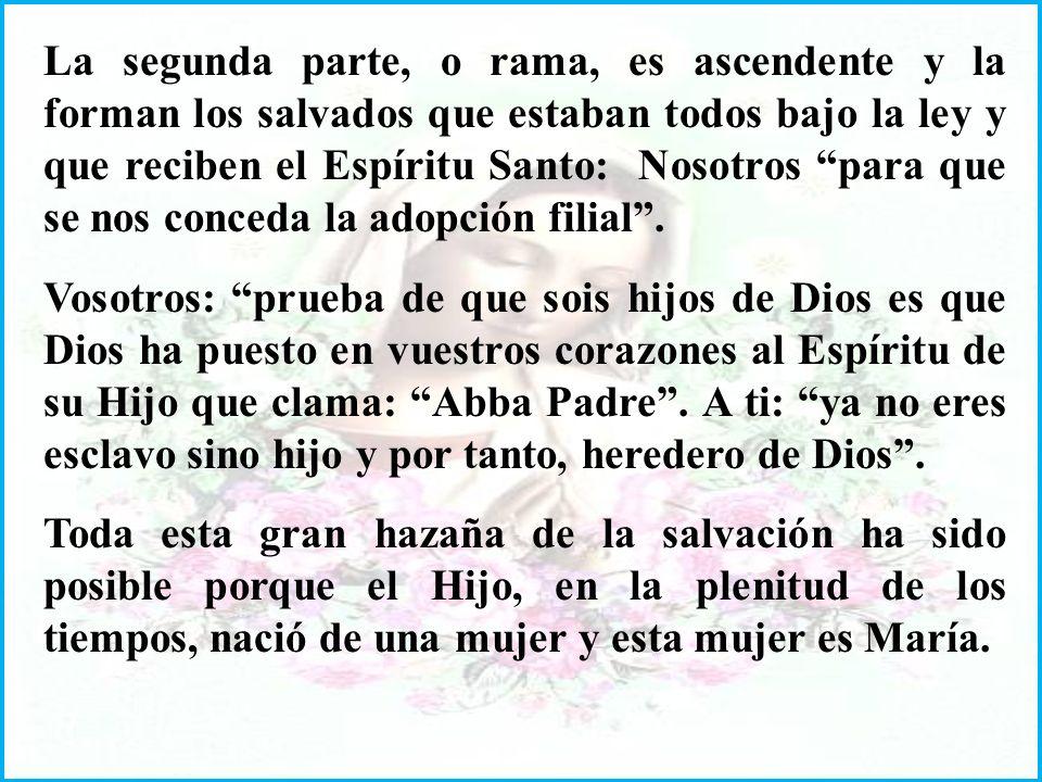 La segunda parte, o rama, es ascendente y la forman los salvados que estaban todos bajo la ley y que reciben el Espíritu Santo: Nosotros para que se nos conceda la adopción filial.
