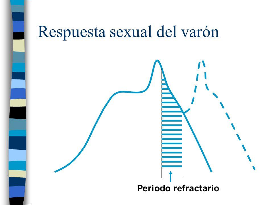 Respuesta sexual del varón Periodo refractario