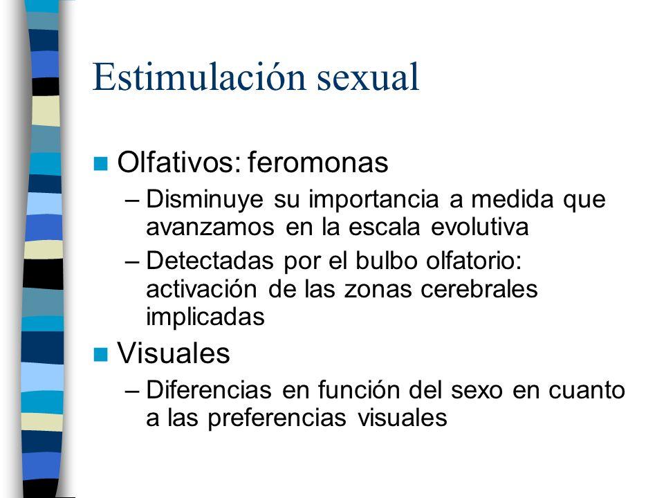 Estimulación sexual Olfativos: feromonas –Disminuye su importancia a medida que avanzamos en la escala evolutiva –Detectadas por el bulbo olfatorio: a